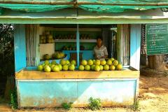Myanmar, Unterwegs auf dem Weg nach Bago, Pomelo-Verkaufsstand