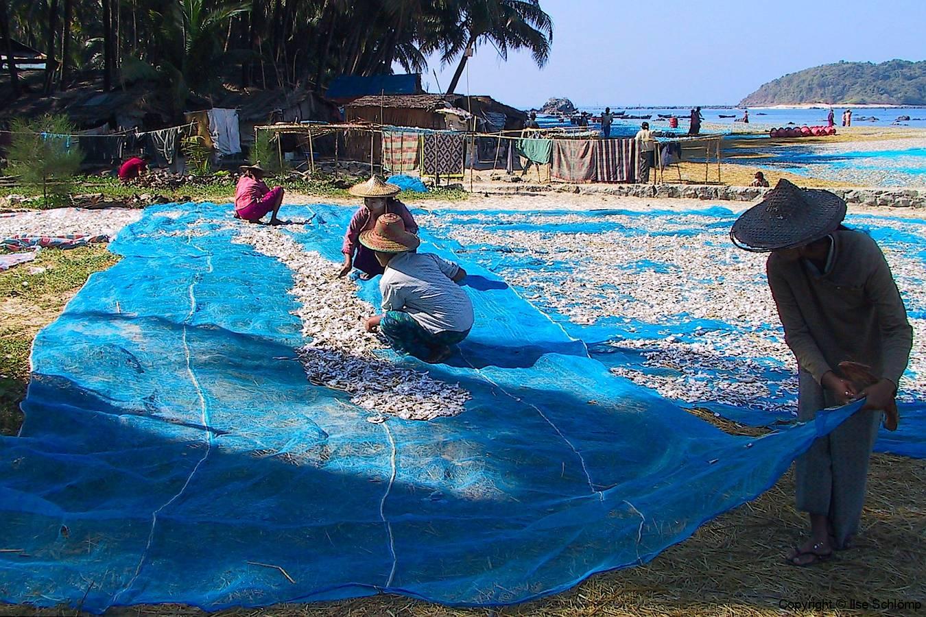 Myanmar, Ngapali Beach, Fische liegen zum Trocknen aus