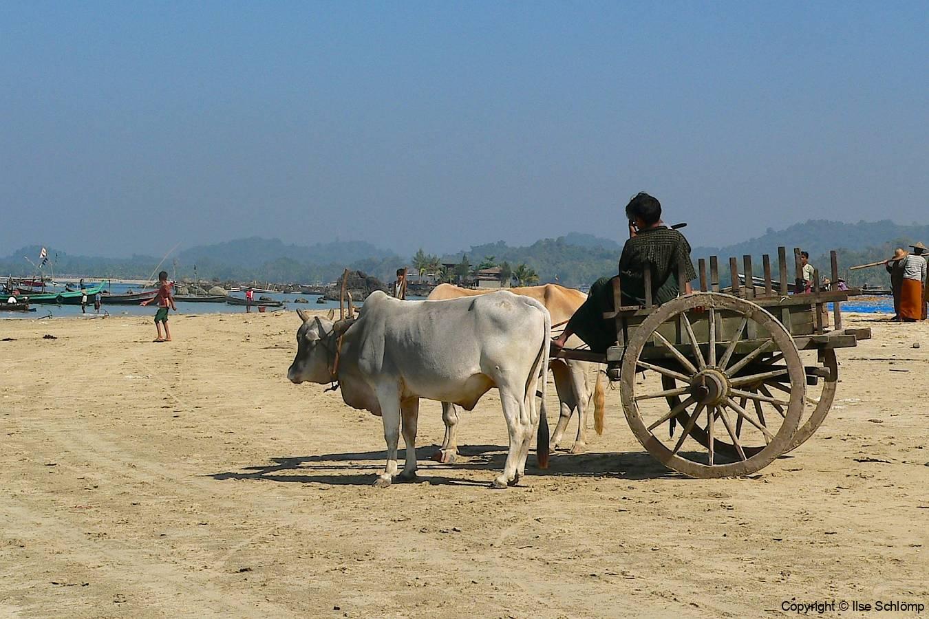 Myanmar, Ngapali Beach, Ochsenkarren warten auf den Abtransport der Fische
