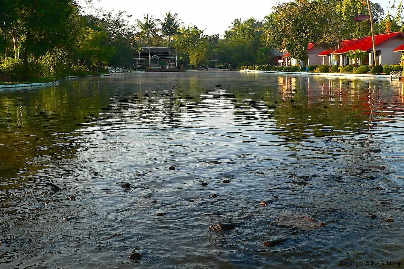 Myanmar, Pyay, Mingalar Garden Resort, Karpfen im See