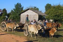 Myanmar, Wir fahren mit dem Ochsenkarren nach Sri Ksetra