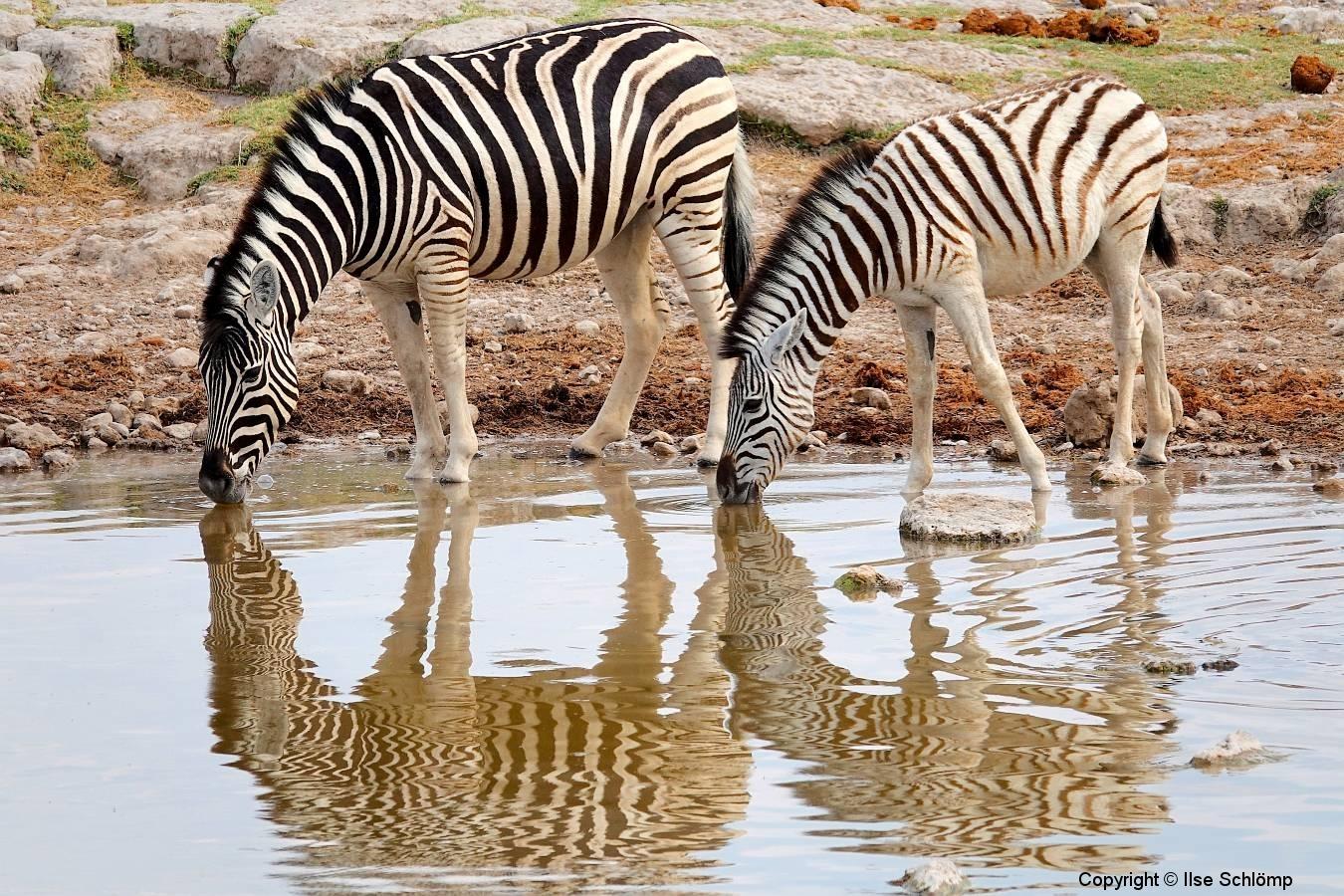 Namibia, Etosha Nationalpark, Wasserspiegelung