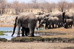 Namibia, Etosha Nationalpark