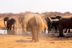 Namibia,Etosha Nationalpark