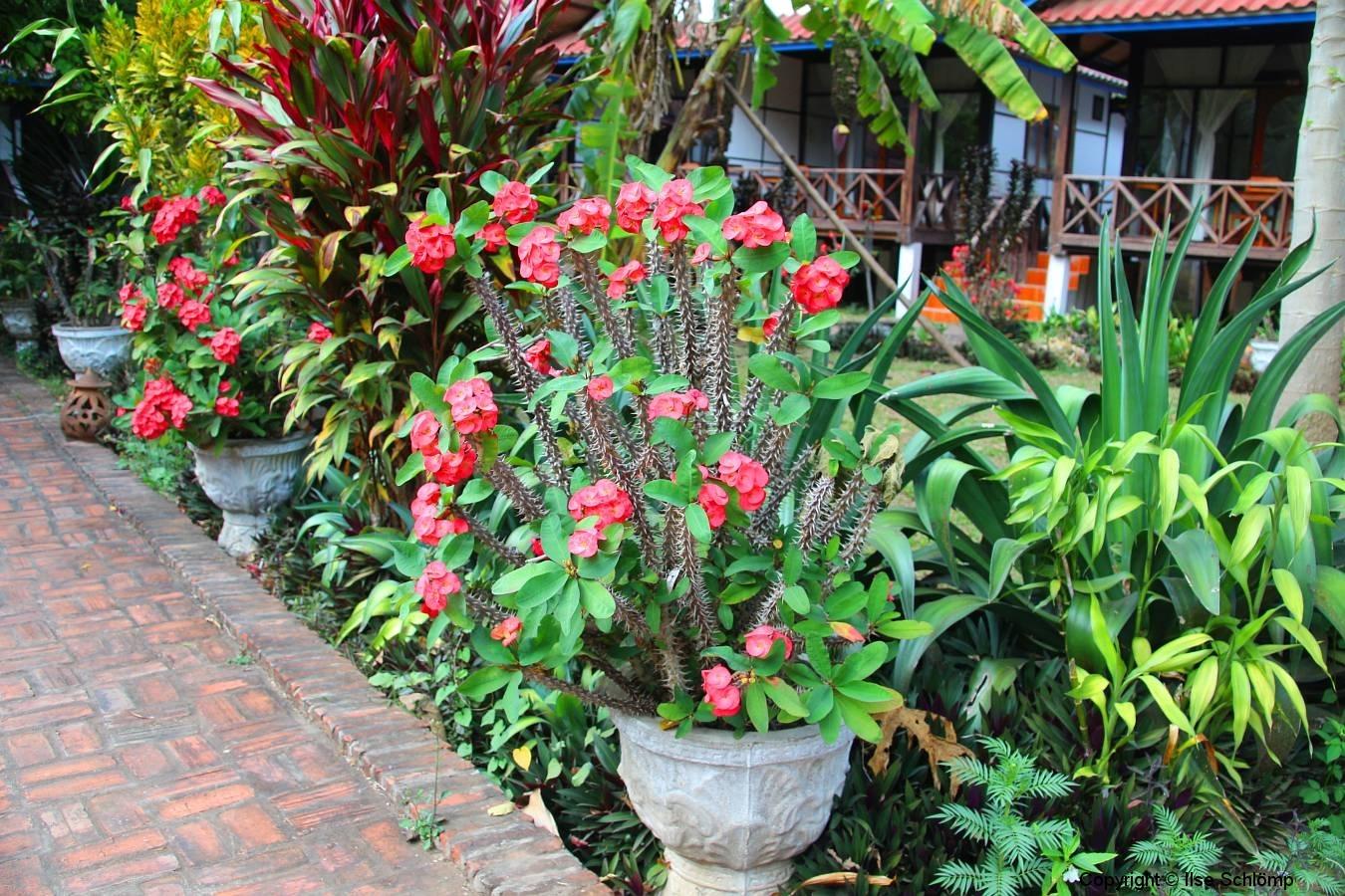 Laos, Ban Nong Khiaw, Phaxang Resort