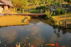 Laos, Oudomxay, NamKat YolaPa Resort, Koi