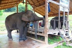 Laos, Oudomxay, Nam Kat Yola-Regenwald