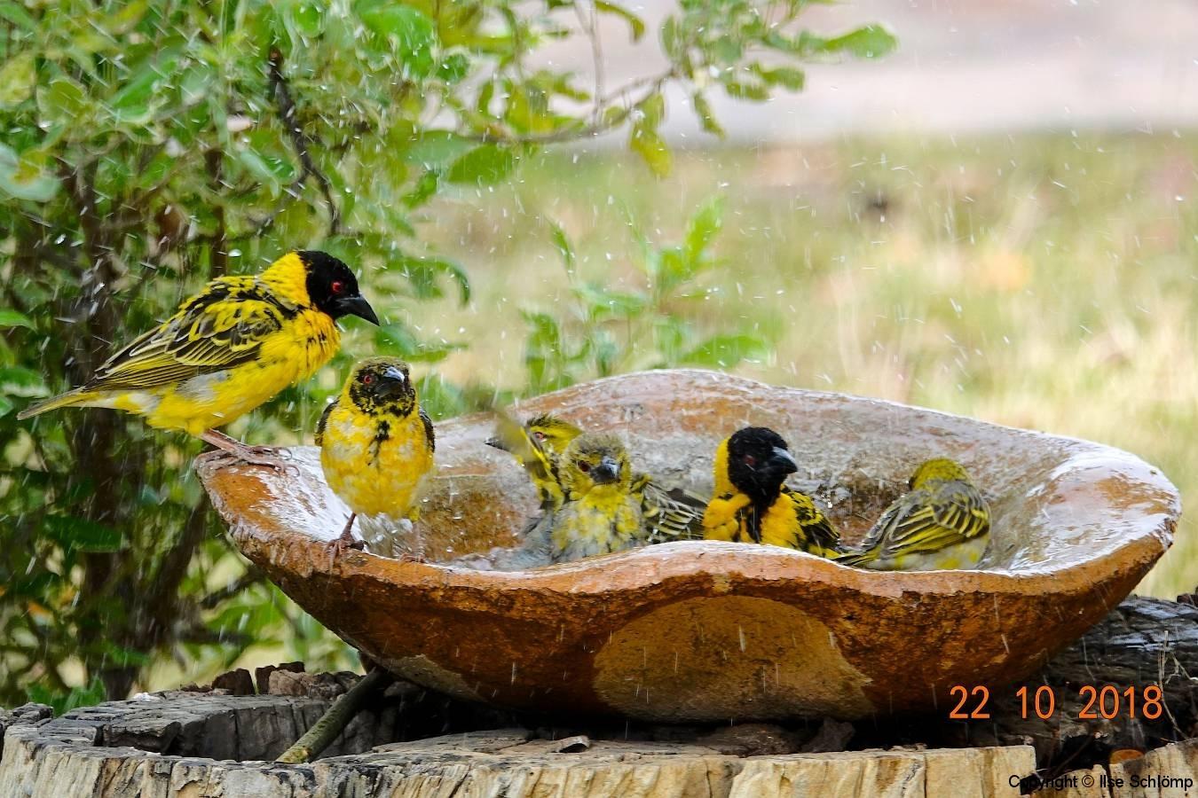 Simbabwe, Hwange Nationalpark, Elephants Eye, Webervögel