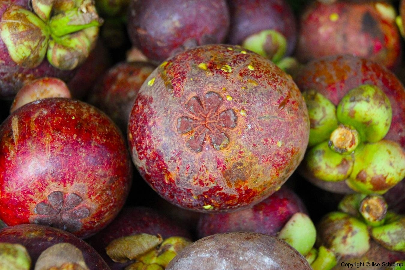 Sumatra, Berastagi, Markt, Mangostanfrucht
