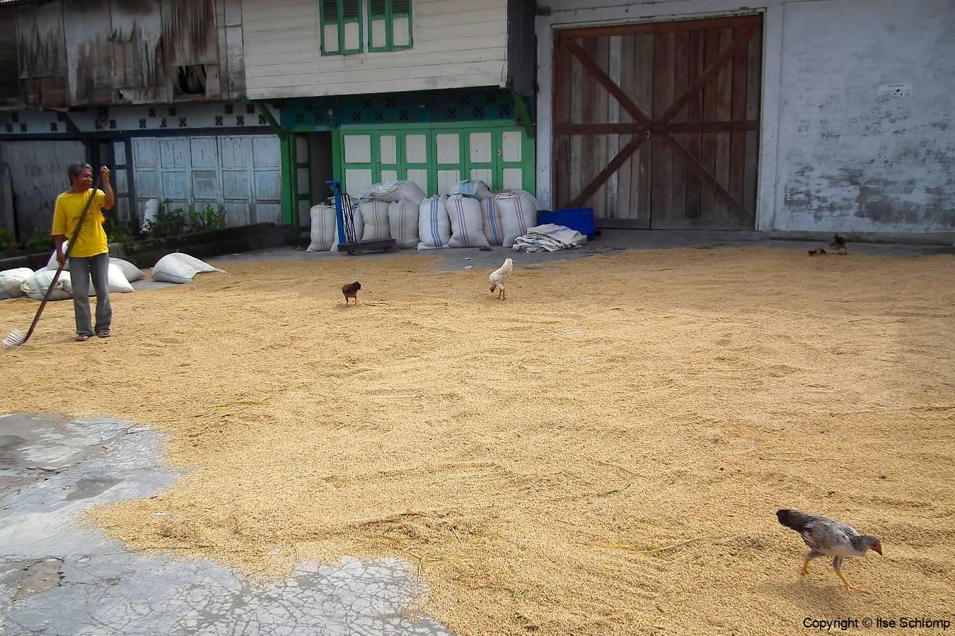Sumatra, Kaffeebohnen liegen zum Trocknen aus