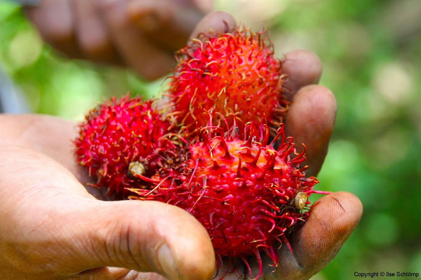 Sumatra, Rambutan