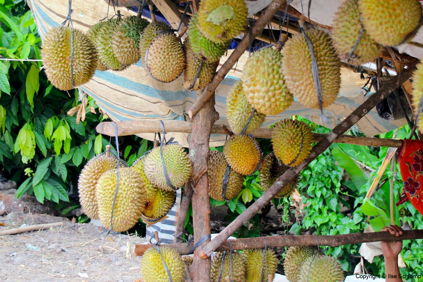 Sumatra, Umgebung Bukittinggi, Durianstand