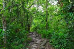 Sumatra, Regenwald Umgebung Bukittinggi