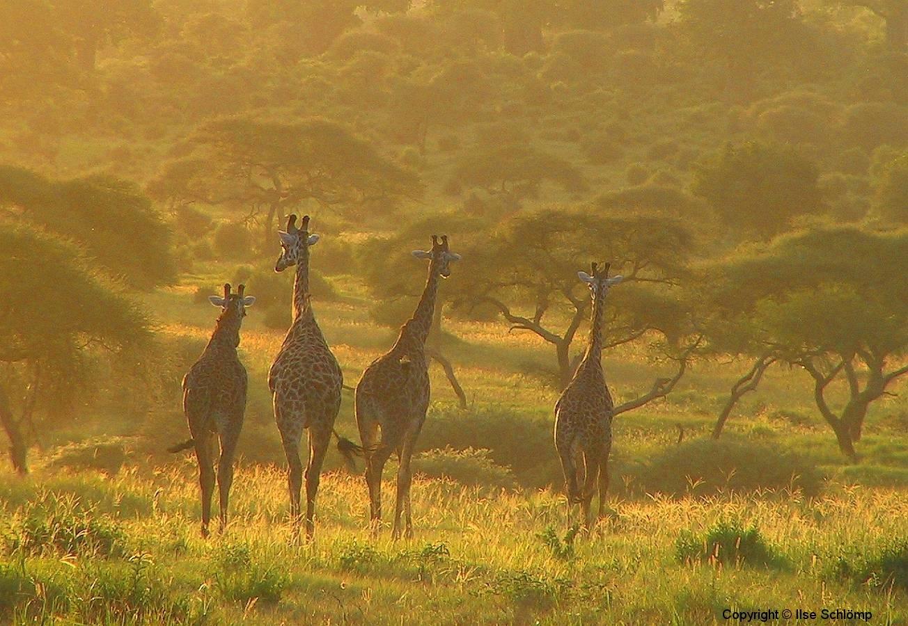 Tansania, Tarangire Nationalpark, Abendstimmung