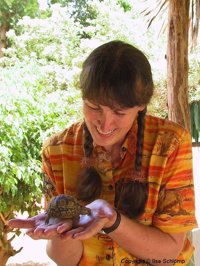 Tansania, Schildkröte