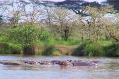 Tansania, Serengeti, Flusspferde