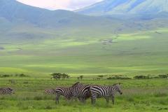 Tansania, Serengeti, Savannenhochland