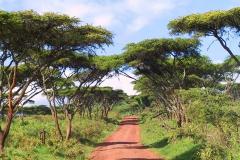 Tansania, Ngorongorokrater, Akazienweg