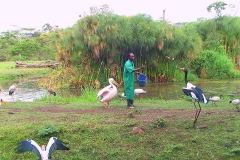 Tansania, Arusha, Sattelstorch