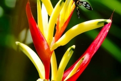 Thailand, Hua Hin, Centara Grand Beach Resort, Papageien Heliconie