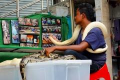 Thailand, Ratchaburi, Schwimmender Markt Damnoen Saduak,  Python