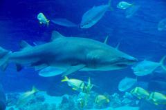USA, Georgia, Atlanta, Georgia Aquarium, Hai
