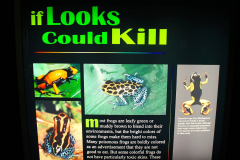 USA, Georgia, Atlanta, Georgia Aquarium