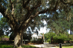 USA South Carolina, Boone Hall Plantage