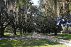 USA South Carolina, Boone Hall Plantage, Die Eichenallee wurde 1743 gepflanzt, Die Pflanzung der Allee dauerte 100 Jahre