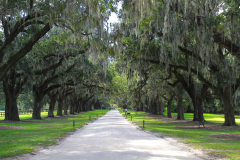 USA South Carolina, Boone Hall Plantage, Steineichenallee
