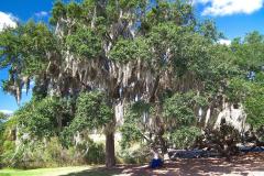 USA, South Carolina, Boone Hall Plantage, Steineiche