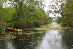 USA, Bootstour durch die Sümpfe Louisianas