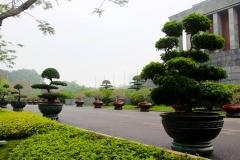 Vietnam, Hanoi, Bonsai