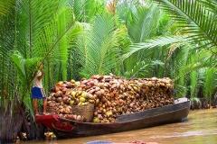 Mekong-Delta, Ein Boot voller Kokusnüsse