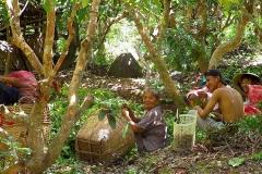 Mekong-Delta, Familie bei der Ernte